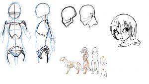 骨格の描き方