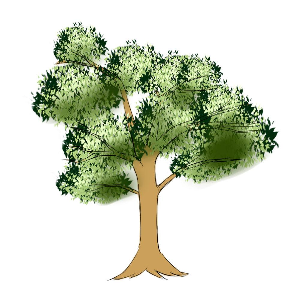 京都校生徒様の木の作画事例
