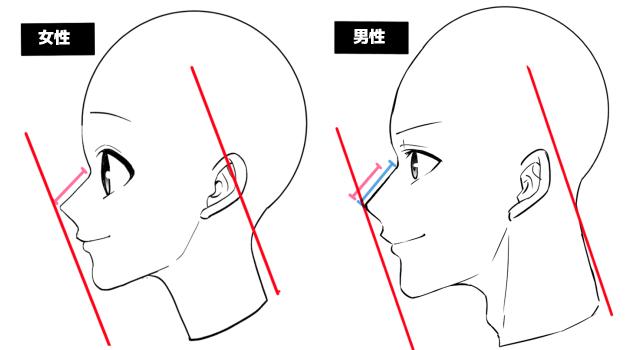 男女の鼻の高さの違い
