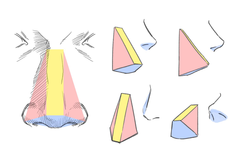 鼻を様々な角度から見たイラスト