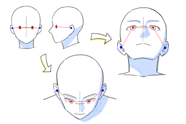 目と耳の位置