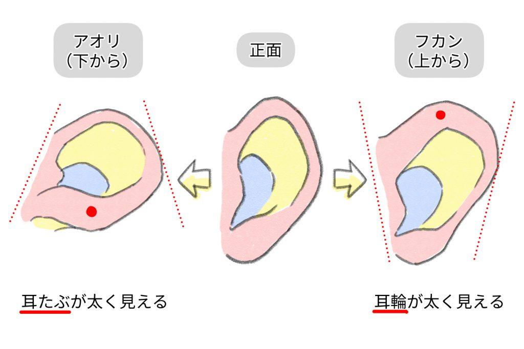 様々な角度から見たときの耳の形