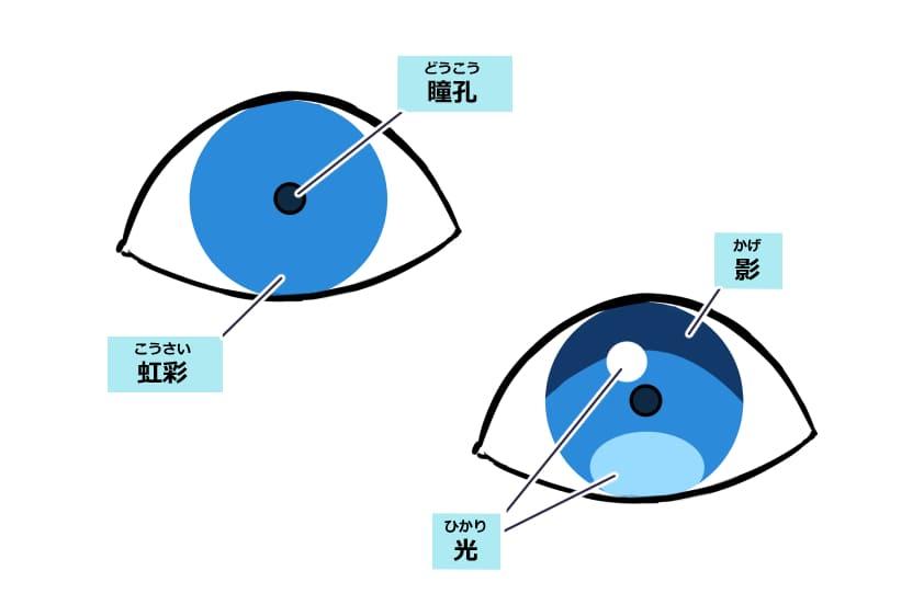 「瞳孔」と「虹彩」などの目の構造