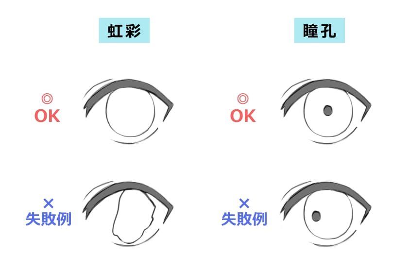 「瞳孔」と「虹彩」の解説