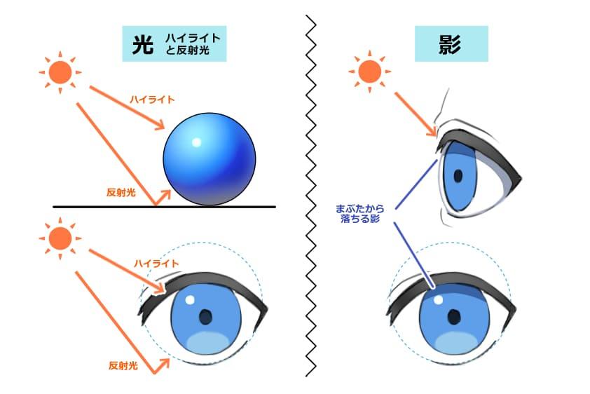「瞳孔」と「虹彩」のハイライト・反射光の解説